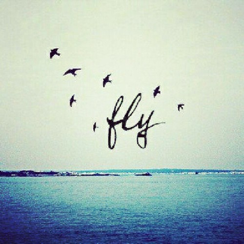 49434-fly-away-quotes